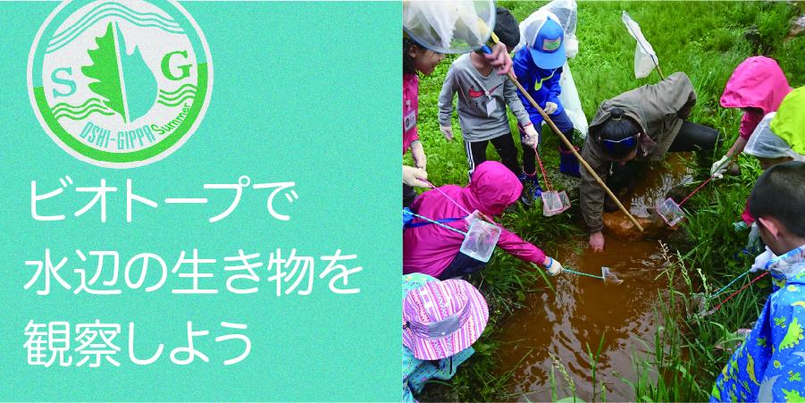 【SGおしぎっぱ隊】ービオトープを作る 水辺の生き物編ー