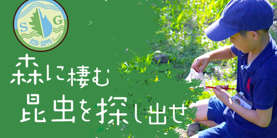 【SGおしぎっぱ隊】ー森に棲む昆虫を探し出せー