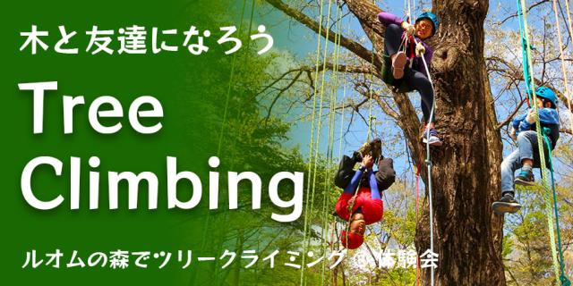 【ルオムの森】ツリークライミング体験会