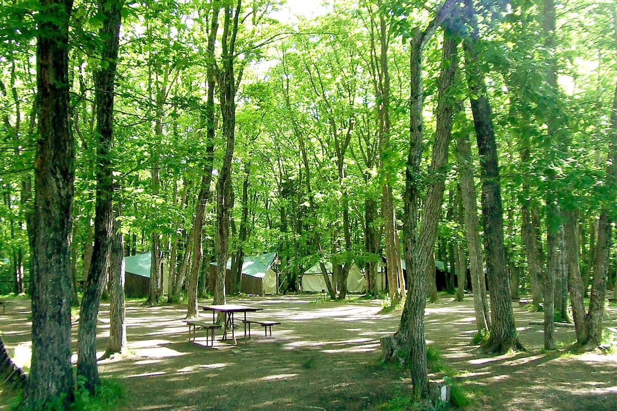林間広々サイト