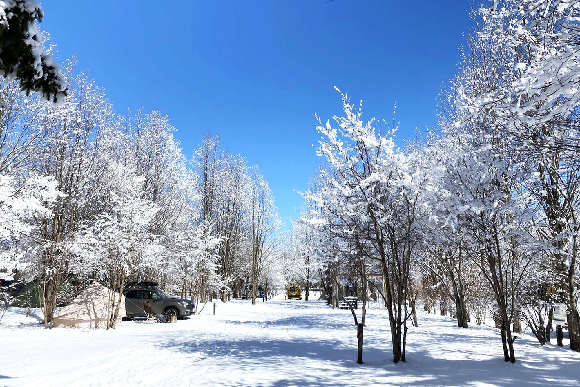 冬の木立パークサイト