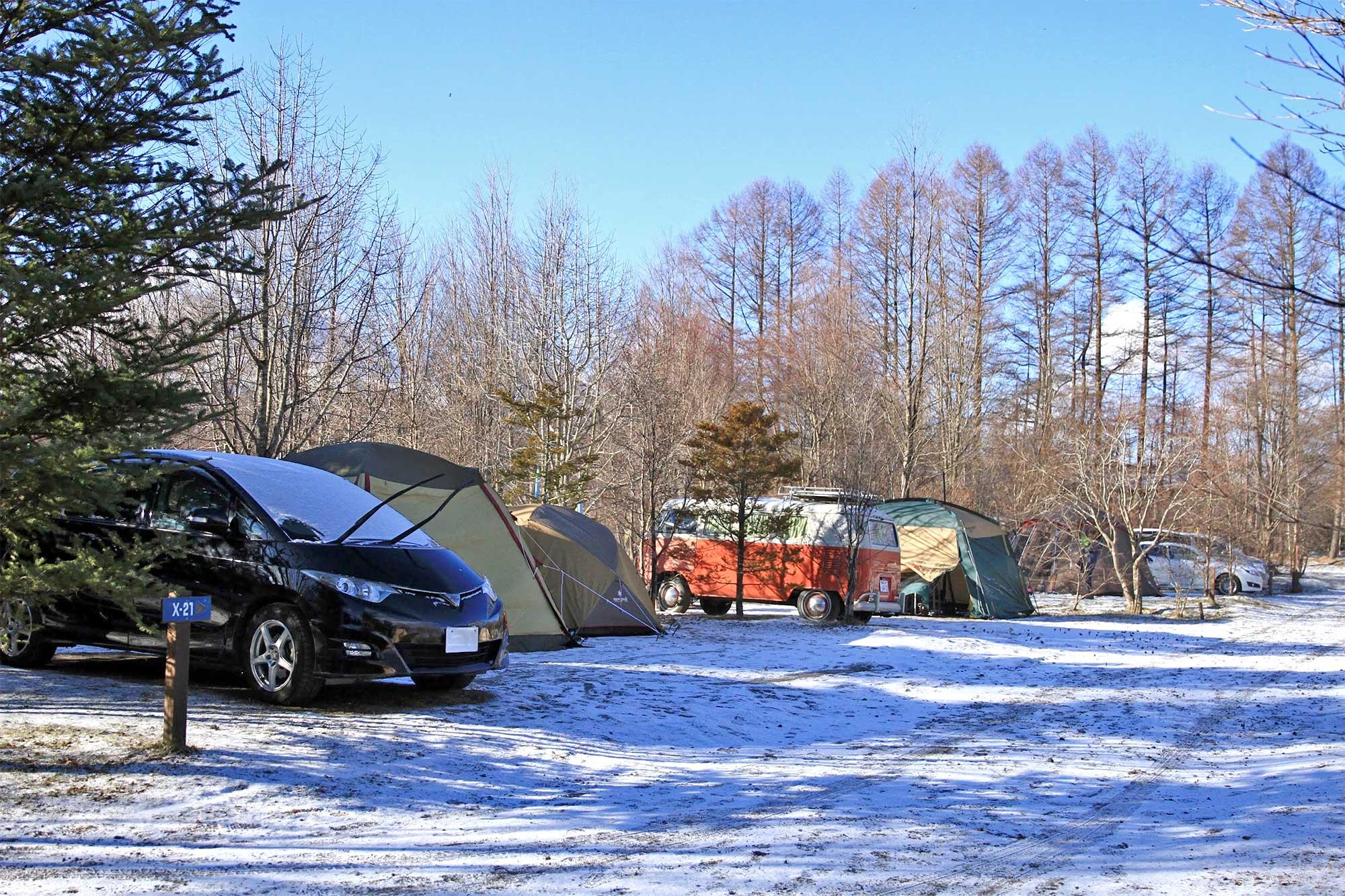 冬の木立サイト